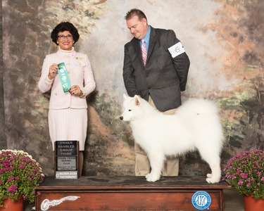 GCH CH TNT's Love and Courage (Harper)